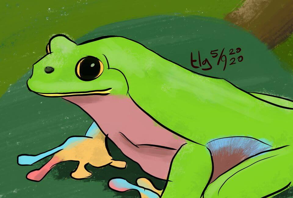 Painting of a frog sitting on a leaf.