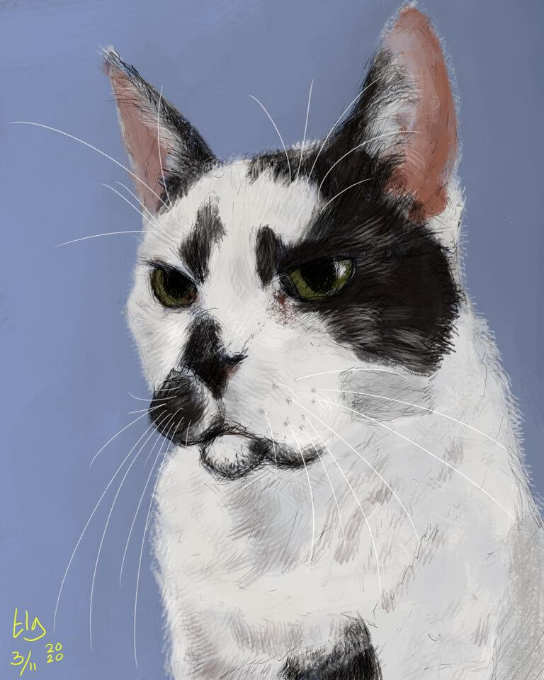 Painting of a big black and white cat. He has enormous whiskers!